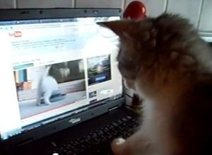 Kitten videos increase your bounce rate